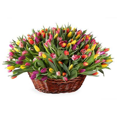 Большая корзина тюльпанов