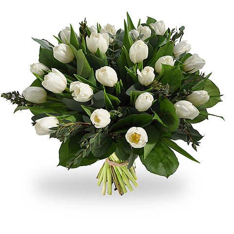 Белые тюльпаны