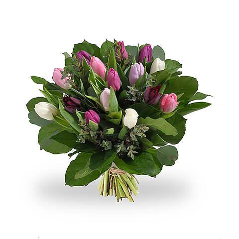 Розовые белые тюльпаны