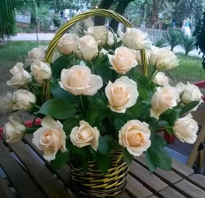 Светло-кремовые розы в корзинке