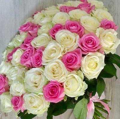 Белые и сиреневые розы
